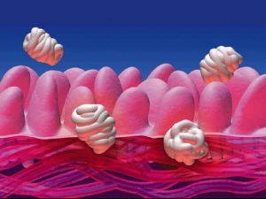 Flora microbica intestinale